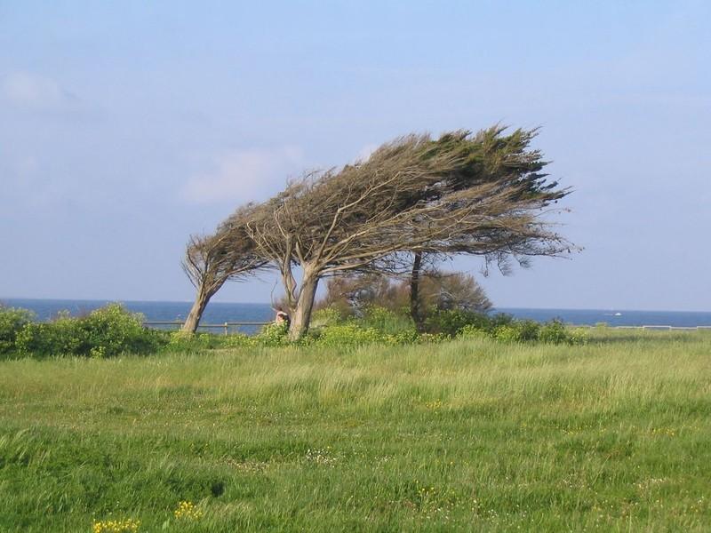 arbresdanslevent.jpg